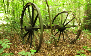 forest, trees, nature, old wagon wheel