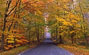 autumn, road, trees, landscape