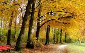autumn, park, trees, footpath, A bench, landscape