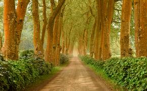 road, trees, landscape