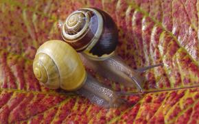 autumn leaf, snails, Macro