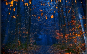 autumn, night, forest, road, trees, nature