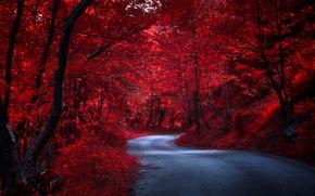 autumn, road, trees, forest, landscape