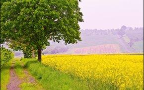 field, road, trees, landscape
