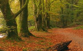otoño, bosque, árboles, carretera, naturaleza