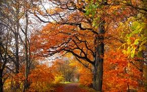 toamnă, rutier, pădure, copaci, peisaj