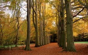 toamnă, parc, pădure, copaci, peisaj