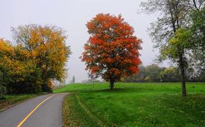 domeniu, rutier, copaci, ceață