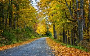 toamnă, pădure, copaci, rutier, peisaj