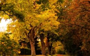 toamnă, parc, pădure, copaci, rutier, peisaj