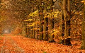 осень, деревья, дорога, пейзаж