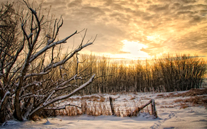 закат, зима, деревья, пейзаж