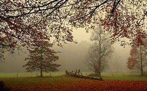 осень, поле, деревья, туман, пейзаж