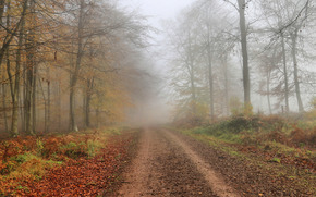 осень, дорога, деревья, туман