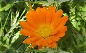 Цветы: жёлтый, цветы, солнце