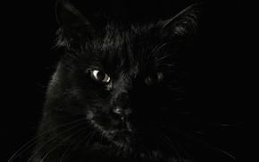Животные: животные, чёрные, страх, кошаки