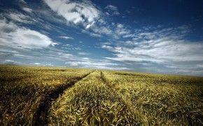 Пейзажи: дорога, поле, лето, небо