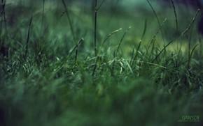 Природа: макро, трава, зеленая фигня, концентрация