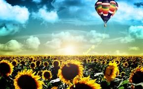 Настроения: жизнь, восход, пейзаж, полет, воздушный шар, подсолнухи, поле, рассвет