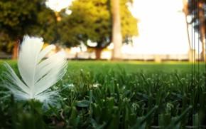 Макро: природа, перо, газон, пыльца, передний план