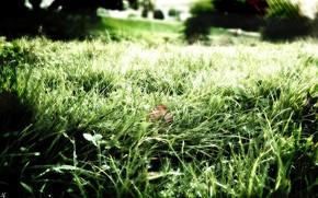 Стиль: зелень, трава, роса, природа, свежесть