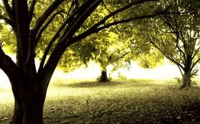 Природа: лес, осень, солнце, деревья
