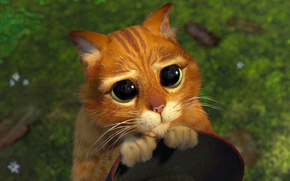 Фильмы: кот, мультик, шрек, жалость