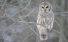 Природа: сова, зима, осень, ветви, дерево, серый