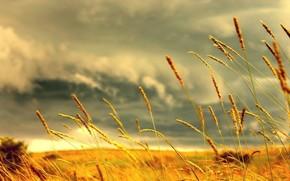 Природа: колосс, трава, желтый