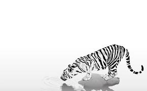 Минимализм: животные, тигр, полоски, черно-белый, жажда, осторожность, простота