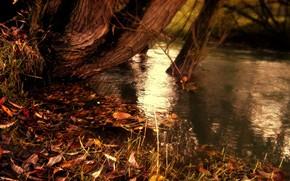 Стиль: природа, осень, полосы, полоски, желтые опавшие листья, река, вода, озеро