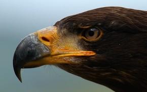 Животные: орел, птица, сила