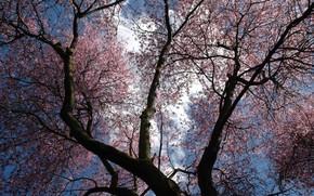 Природа: деревья, небо, цветы, фиолетовый