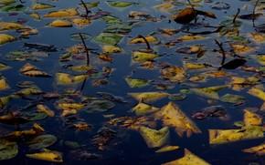 Природа: осень, листья, вода, озеро, гладь, утонули