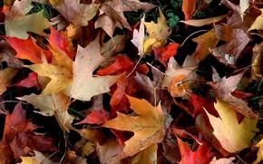 Природа: осень, листья, листва, красный, желтый, упавший