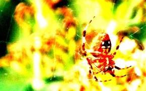 Разное: фон, жёлтый, паук, паутина