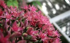 Цветы: цветок, макро, макросьемка