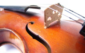 Макро: скрипка, музыка, жёлтый
