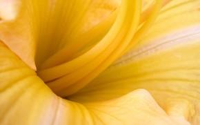 Цветы: макро, цветок, жёлтый
