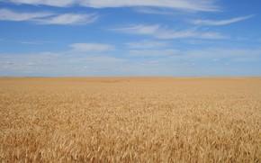 Пейзажи: фон, поле, небо, зерно, спокойствие