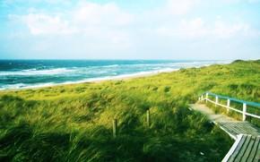 Пейзажи: зелень, дорога, путь, море, волны