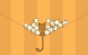 Минимализм: полосы,  кот,  кошка,  нить,  птицы,  цыплята