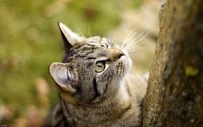 Животные: кошаки, кот, кошка, обоя