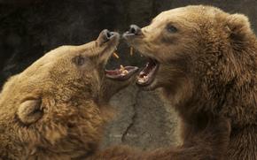 Животные: медведи, спарринг, пасть