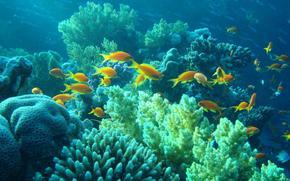 Обои и картинки для рабочего стола: подводный мир (84 шт.
