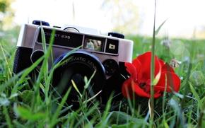 Настроения: фон, мак, трава, фотоаппарат, растение, цветок, цветочек, красный, настроения, объектив, обои