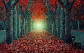 Пейзажи: осень, аллея, листья, сияние