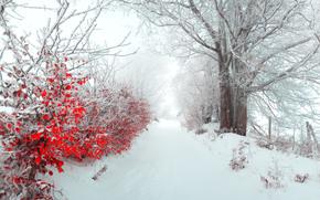 Пейзажи: деревья, кусты, аллея, листья, зима, снег, панорама