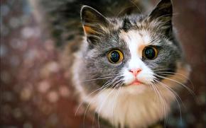Животные: кот, или кошка, кто их разберёт