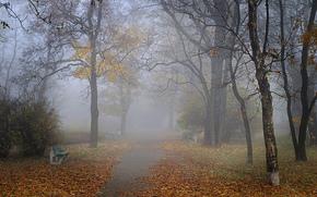 Природа: туман, осень, парк, скамейки, аллея
